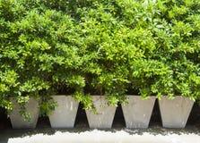Plantes vertes dans le pot photos libres de droits