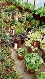 Plantes vertes dans Sofia Botanical Garden photos libres de droits