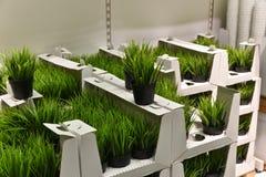 Plantes vertes dans un magasin photographie stock