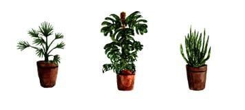Plantes vertes de maison peinte à la main d'aquarelle Collection décorative de verdure parfaite pour la copie, affiche, carte fai illustration de vecteur