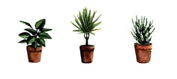 Plantes vertes de maison peinte ? la main d'aquarelle Collection d?corative de verdure parfaite pour la copie, affiche, carte fai illustration de vecteur