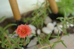 Plantes vertes de petite fleur orange dans des lames du pot deux Photo stock
