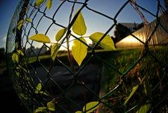 Plantes vertes et frontière de sécurité Images stock