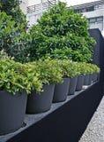 Plantes vertes mises en pot Image stock