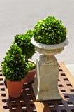 Plantes vertes mises en pot Photos libres de droits