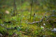 Plantes vertes pour votre conception Image libre de droits