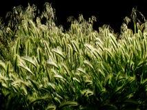 Plantes vertes s'élevant avec la lumière de dos de lumière du soleil Images libres de droits