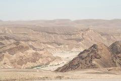 Plantes vertes s'élevant dans le lit de la rivière de Negev Images libres de droits