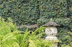 Plantes vertes s'élevant sur le mur dans le jardin Images libres de droits