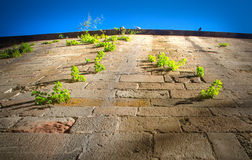 Plantes vertes s'élevant sur le mur en pierre Image libre de droits