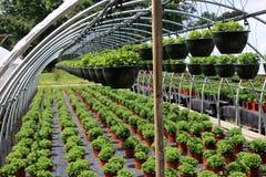 Plantes vertes saines Photo stock