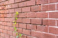 Plantes vertes sur le mur rouge Image stock