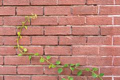 Plantes vertes sur le mur rouge Photo stock