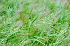 Plantes vertes sur une zone en été image stock