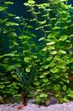 Usines dans l'aquarium photographie stock libre de droits