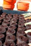 Planteur Image stock
