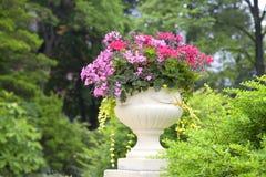 Planteur de remorquage de fleur de géranium de lierre Image stock