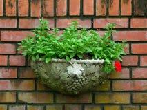Planteur de style de vintage avec les feuilles vert clair sur le mur de briques de terre cuite photos stock