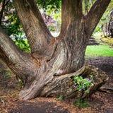 Planteur de tronc d'arbre photographie stock libre de droits