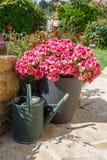 Planteur et boîte d'arrosage avec les fleurs roses de géranium images libres de droits