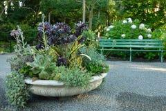 Planteur succulent Photo stock