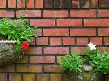 Planteurs de style de vintage avec des fleurs et des feuilles vert clair sur le mur de briques de terre cuite photographie stock