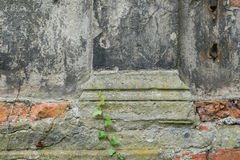 Plantez l'élevage au-dessus du vieux mur endommagé, plan rapproché Images libres de droits
