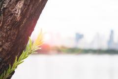 Plantez l'élevage avec la lumière du soleil avec le paysage clair à l'arrière-plan, à la croissance et au mode de vie Images stock