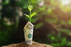 plantez l'élevage avec le billet de banque sur le sol et le coucher du soleil Concept Photographie stock