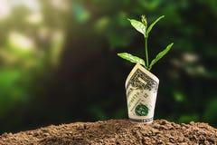 plantez l'élevage avec le billet de banque sur le sol et le coucher du soleil finane de concept Photos stock