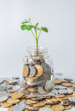 Plantez l'élevage dans des pièces de monnaie de l'épargne - Inverstment et concet d'Internet Photos stock