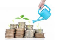 Plantez l'élevage dans l'investissement et l'etirement de pièces de monnaie de l'épargne Photo stock