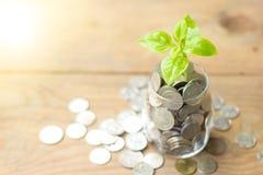 Plantez l'élevage dans l'épargne que les pièces de monnaie cognent et des pièces de monnaie sur la table en bois Photo stock