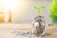 Plantez l'élevage dans l'épargne que les pièces de monnaie cognent et des pièces de monnaie sur la table en bois Images libres de droits
