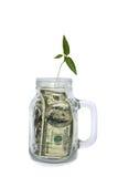 Plantez l'élevage dans le pot avec des dollars sur le fond blanc Photo stock