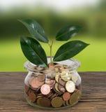 Plantez l'élevage dans le pot en verre avec des pièces de monnaie d'argent Image stock