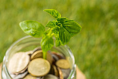 Plantez l'élevage dans le pot en verre de pièces de monnaie pour l'argent sur l'herbe verte Photo libre de droits