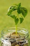 Plantez l'élevage dans le pot en verre de pièces de monnaie pour l'argent sur l'herbe verte Images stock