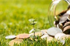 Plantez l'élevage dans le pot en verre de pièces de monnaie pour l'argent sur l'herbe verte Photos libres de droits