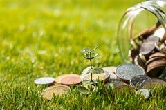 Plantez l'élevage dans le pot en verre de pièces de monnaie pour l'argent sur l'herbe verte Image stock