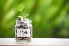 Plantez l'élevage dans le pot en verre de pièces de monnaie pour l'économie et les investmen d'argent Photo stock