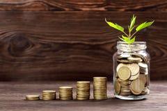 Plantez l'élevage dans le pot en verre de pièces de monnaie pour l'argent Image libre de droits