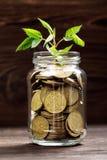 Plantez l'élevage dans le pot en verre de pièces de monnaie pour l'argent Photos libres de droits