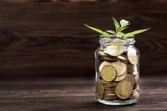 Plantez l'élevage dans le pot en verre de pièces de monnaie pour l'argent Image stock