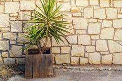 Plantez l'élevage dans un pot de fleur, se tenant près d'un mur de briques Photographie stock libre de droits