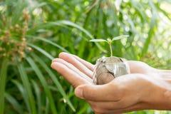 Plantez l'élevage des pièces de monnaie d'argent dans le pot en verre tenu par des mains du ` un s d'homme Images libres de droits
