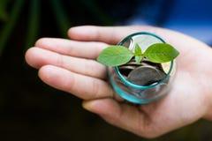 Plantez l'élevage des pièces de monnaie d'argent dans le pot en verre tenu par des mains du ` un s d'homme Image libre de droits