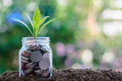 Plantez l'élevage des pièces de monnaie dans le pot en verre contre le natura brouillé Photo stock