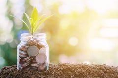 Plantez l'élevage des pièces de monnaie dans le pot en verre contre le natura brouillé Photographie stock libre de droits
