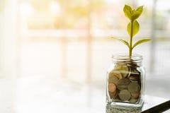Plantez l'élevage des pièces de monnaie dans le pot en verre sur le CCB naturel brouillé Photographie stock